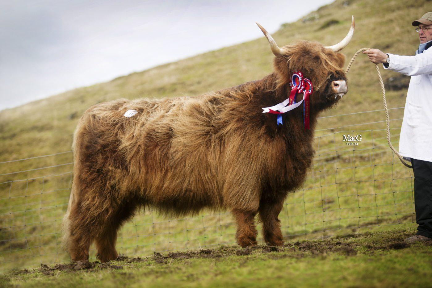 Highlander Ormsary