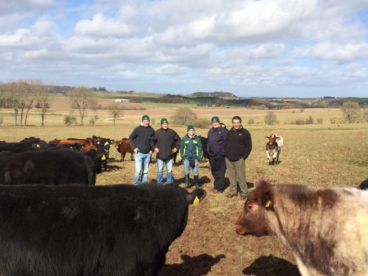 Austrian cattle breeders, Angus, Shorthorn, Wagyu