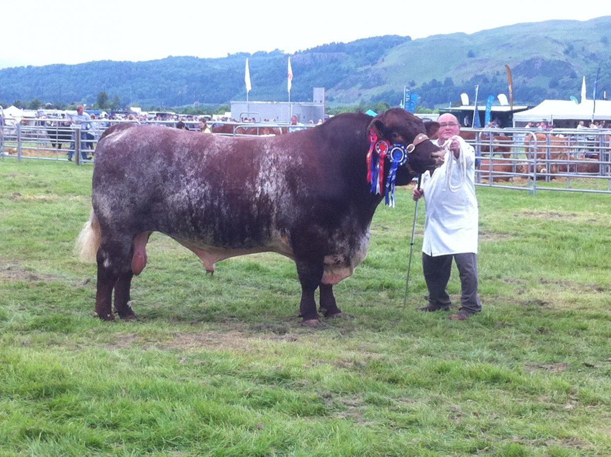 Quoiggs Extra Special Champion Stirling Show
