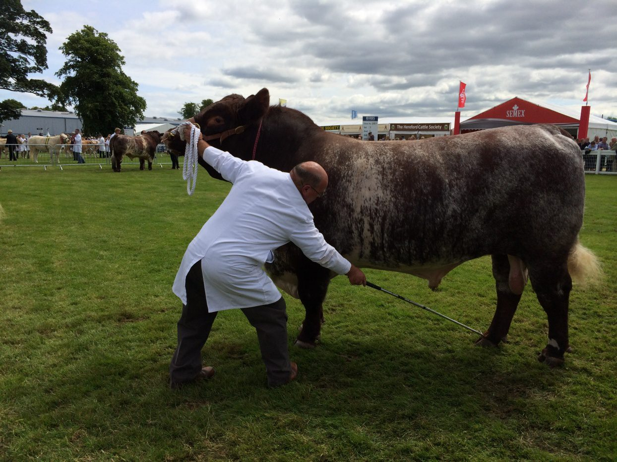 Quoiggs Extra Special, George McCulloch, Highland Wagyu